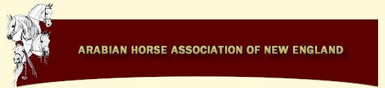 Arabian Horse Association Of New England
